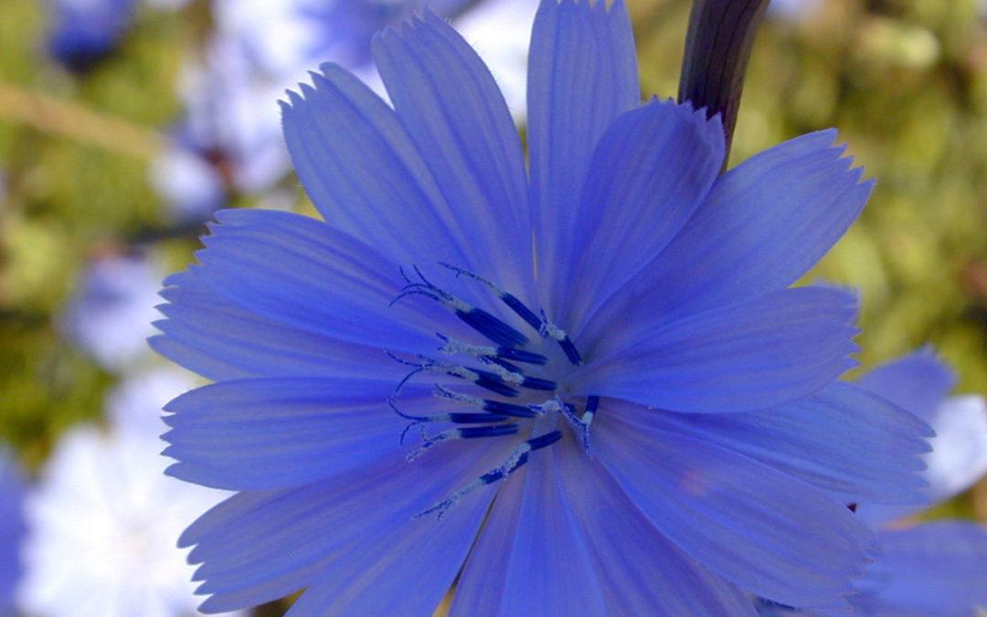 En quête d'équilibre avec les fleurs de Bach