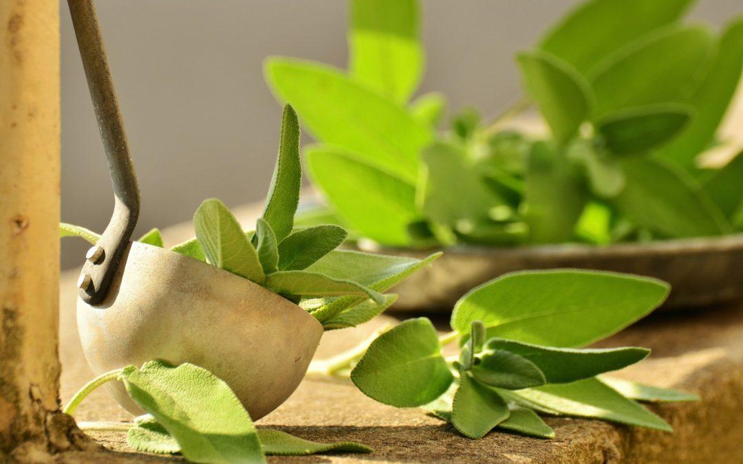La cuisine des plantes médicinales