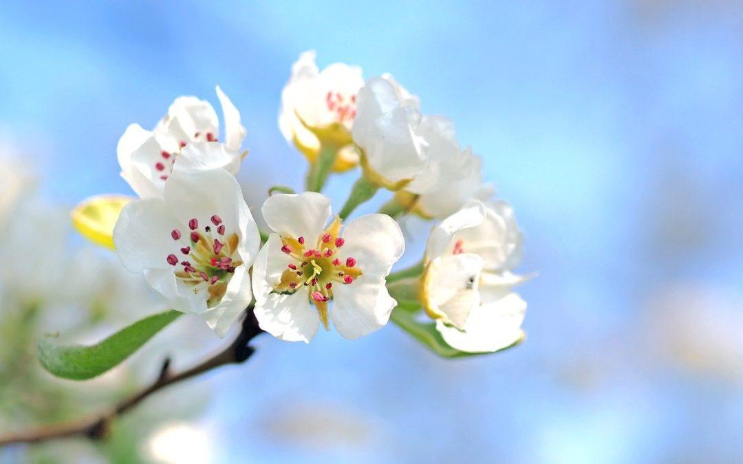 Le cycle des saisons en naturopathie : le printemps